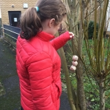 Pupil hanging  a bird feeder on a tree