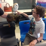 World of Owls show pupils a barn owl