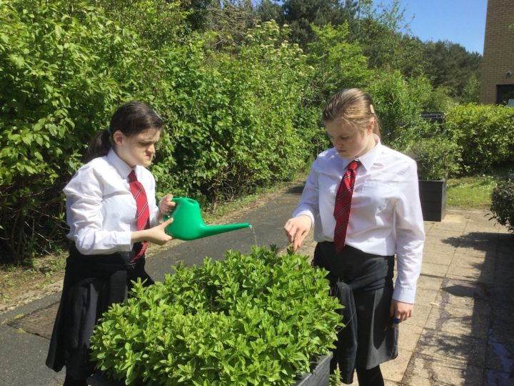 Picture of two pupils watering a plant